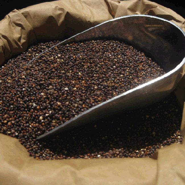 how to cook black quinoa grain